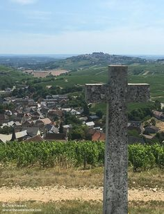 Loire Valley Wine, Vineyard, Outdoor Decor, Vine Yard, Vineyard Vines