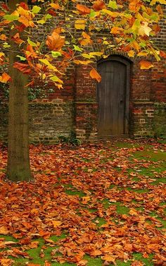 Autumn Leaves in Osterley Park, London | by Laura Nolte