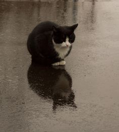 Kitteh come out of the rain!