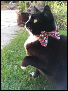 Christmas Snowman Bow Tie Cat Collar £6.00