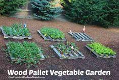 Pallet Gardening – An Abundance of Strawberries! How to make a pallet strawberry garden. Herb Garden Pallet, Backyard Garden Landscape, Small Backyard Gardens, Garden Landscaping, Outdoor Gardens, Pallet Gardening, Pallet Planters, Courtyard Gardens, Pallet Fence