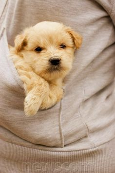 Top 10 Cutest Puppies You Could Put in Pocket