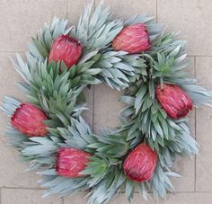 """Large wreath of Silver Tree and Pink Ice Protea This fresh wreath will gradually dry. Approx. 22"""" Fresh Christmas Wreath $95 + SHIP"""