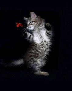 Gato da dança Retrato para 480x800