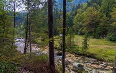 metsä kuvia, joki taustakuvia, maisemakuvia, puut taustat