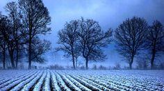 winterblue - null