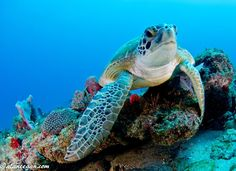 Great colors under the Sea!