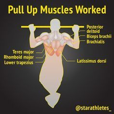 """Pull ups are a compound exercise that works your upper body. The target muscle is the """"latissimus dorsi"""" or the well-known lats. Your lats are the muscle group which determines how wide your back is. If you want to achieve a V-shaped back, then pull ups (or substitution exercises as Lat Pulldowns) must belong in your workout routine. Doing pull-ups is basic when it comes to the level of strength you need to have to achieve them"""