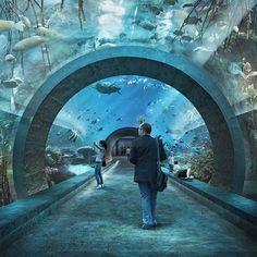 boltshauser architekten beats zaha hadid + MVRDV to design basel aquarium Aquarium Architecture, Water Architecture, Museum Architecture, Architecture Design, Aquarium Design, Basel, Aquariums, Mon Zoo, David Chipperfield Architects