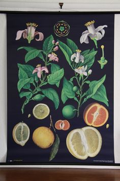 Created for educational purposes, this series of graphic botanical and zoological images were illustrated by Jung-Koch-Quentell in the 1890's and updated in the 1950's and 1960's. These vintage style