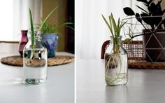 pflanzen vermehren durch stecklinge ausl ufer absenker teilung wildfind wildkr uter. Black Bedroom Furniture Sets. Home Design Ideas