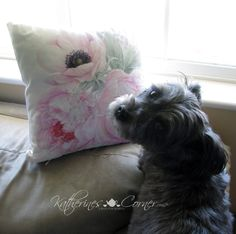 our sweet Izzy stopping to smell the flowers ( peonies pillow available at Katherines Corner shop)