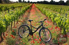 Hermosos viñedos #bicicleta #flores #WineUp
