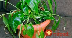 2-2 House Plants, Stuffed Peppers, Vegetables, Zero Waste, Food, Indoor House Plants, Stuffed Pepper, Essen, Foliage Plants