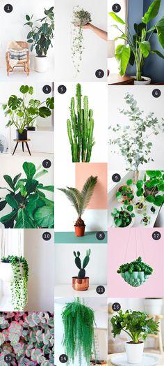 Sélection plantes ve
