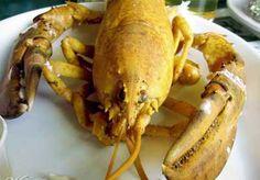 Yellow lobster.  Google Image Result for http://www.freedomsphoenix.com/Uploads/Graphics/173/08/173-0801211034-lobsteryellow.jpg