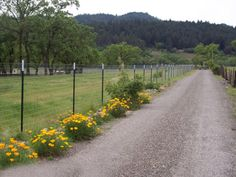 T-posts wire fence