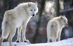 Το Μακεδονικό: Ο λύκος, ο Όσιος και τα γαϊδουράκια