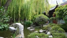 You would never guess that these huge beautiful Chinese gardens are right in the middle of Sydney!!