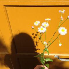 รูปภาพ flowers, yellow, and aesthetic Selfie Foto, Plants Are Friends, A Silent Voice, Yellow Painting, Aesthetic Images, Alien Aesthetic, Aesthetic Yellow, Aesthetic Indie, Happy Colors