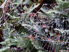 Wunderbare Motive im Spätsommer | Altweibersommer – Tau im Spinnennetz (c) Frank Koebsch (3)