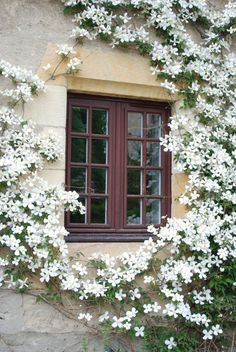 Where To Put the Clematis? - Pith + Vigor