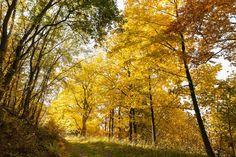 Der Diemelsteig erschließt einen besonders reizvollen Abschnitt des Naturparks Diemelsee