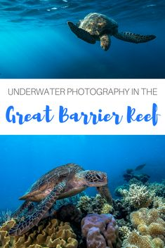 Underwater photographer and dive master Tom Park gives us insight into life at the Great Barrier Reef, documenting some of the most beautiful coral reefs and wildlife.  #australia #cairns #greatbarrierreef #fish #seaturtles #diving #scuba