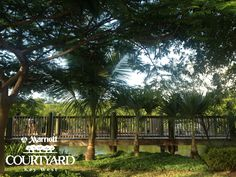 Our lush green property gives you the true tropical experience at the #marriottcourtyardkeywest #KeyWest #KeyWestHotel