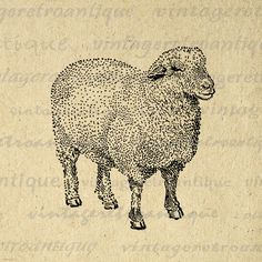 Printable Oxford Down Sheep Digital Download Image Farm Animal Graphic Vintage Clip Art. High resolution digital graphic clip art for printing, fabric transfers, t-shirts, pillows, tea towels, papercrafts, and many other uses. Real vintage clip art. Antique artwork. This digital graphic is high quality, large at 8½ x 11 inches. Transparent background version included with every digital image.