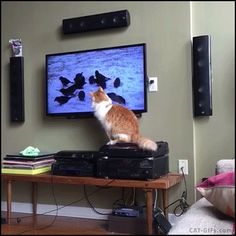 CAT GIF • Cats are magic. They can scare birds even on TV sreen