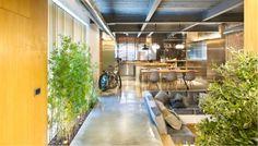 No lo decimos nosotros, sino la organizaciónScientific American: las plantas de interior limpian el aire de nuestras casas.