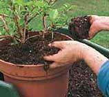 Jardín de macetas. 25 consejos sobre macetas y jardineras.