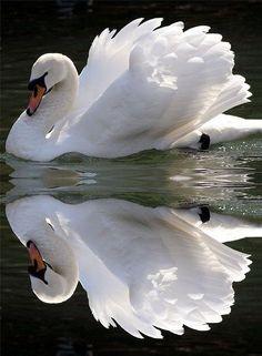 ...beautiful reflection