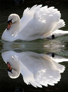 ...beautiful reflection