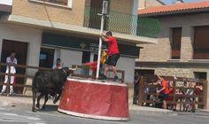 Santacara: Vacas de Pedro Domínguez