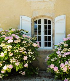 the hydrangea, just help make this beautiful window & shutters more charming
