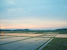 田植え終わり 水を張った水田 | イッキのニッキ