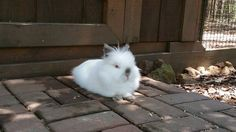 keep Your Rabbits Safe in the Summer -- summer is dangerous for rabbits, especially outdoor ones (they're wearing a fur coat)
