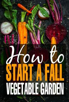 Check out these gardening tips to get your Fall vegetable garden started in time for the autumn. #VegetableGarden
