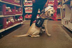 Ira the Diabetic Alert Dog in Walmart