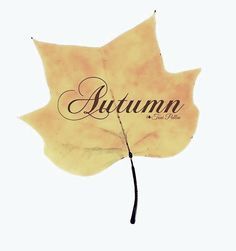 September Song, Fall Is Coming, Golden Days, Four Seasons, Autumn Leaves, Caramel, Whisper, Shades, Mood