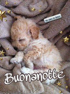 Gifs, Nighty Night, Good Night, Bonjour, Presents