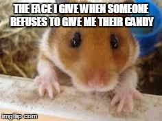 What Cracker Hamster Lol With Images Funny Hamsters Cute
