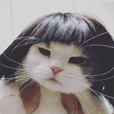 YOONJI MY DARLING, IS THAT U? Cute Funny Animals, Cute Baby Animals, Animals And Pets, Funny Cats, I Love Cats, Cool Cats, Kittens Cutest, Cats And Kittens, Gatos Cool