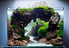 2015 AGA Aquascaping Contest - Entry #489
