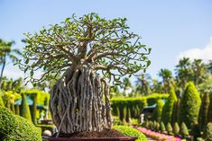13 Types of Bonsai Trees (by Style and Shape Plus Pictures) Bonsai Tree Types, Bonsai Trees, Unique Trees, Replant, Cactus Plants, Seeds, Home And Garden, Shapes, Pictures