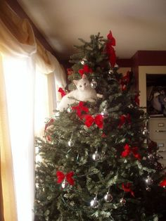 Ideas Funny Christmas Tree Kitty For 2019 Cat Christmas Tree, Christmas Kitten, Christmas Animals, Christmas Humor, Merry Christmas, Pretty Cats, Beautiful Cats, Gatos Cats, Tier Fotos