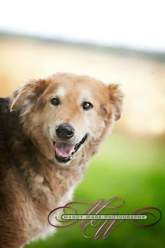 Hinder is one of the most sweet, gentle and loving dogs we have ever had come into rescue. He was found on the side of the road, and spent some time at the local pound before coming into rescue. Hinder was a bit unsure of himself when he arrived,...
