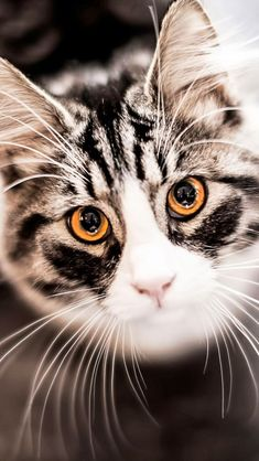 5 Cats with incredible eyes, these eyes are just amazing :)